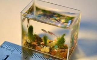 Bể cá có dung tích 2 thìa nước